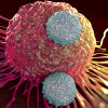 T cells attacking cancer cell